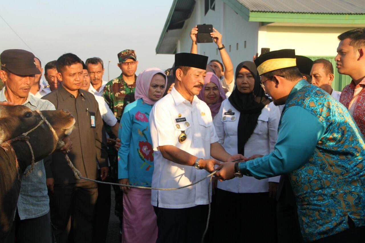 Kesultanan Hasanuddin Malaysia Qurban 22 Ekor Sapi di Gowa