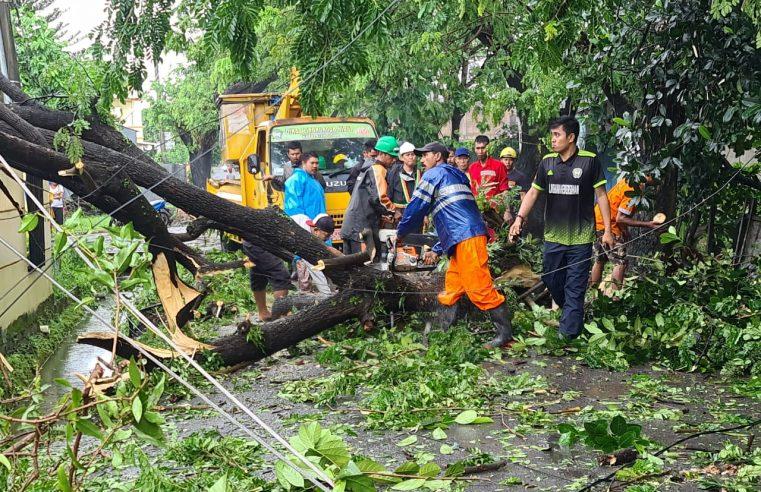 13 Pohon Tumbang Akibat Hujan Lebat dan Angin Kencang di Kabupaten Gowa
